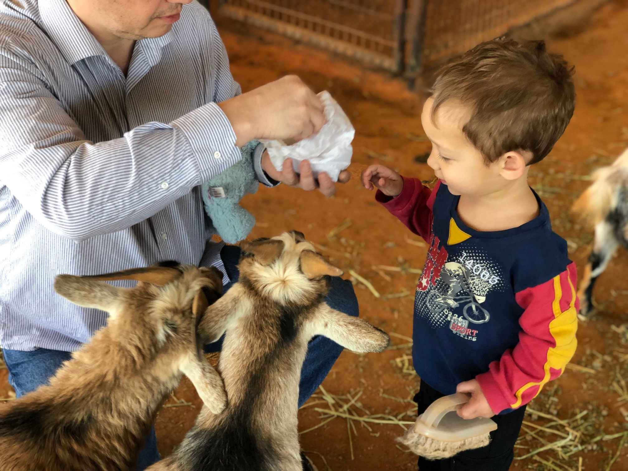 Love baby goats.
