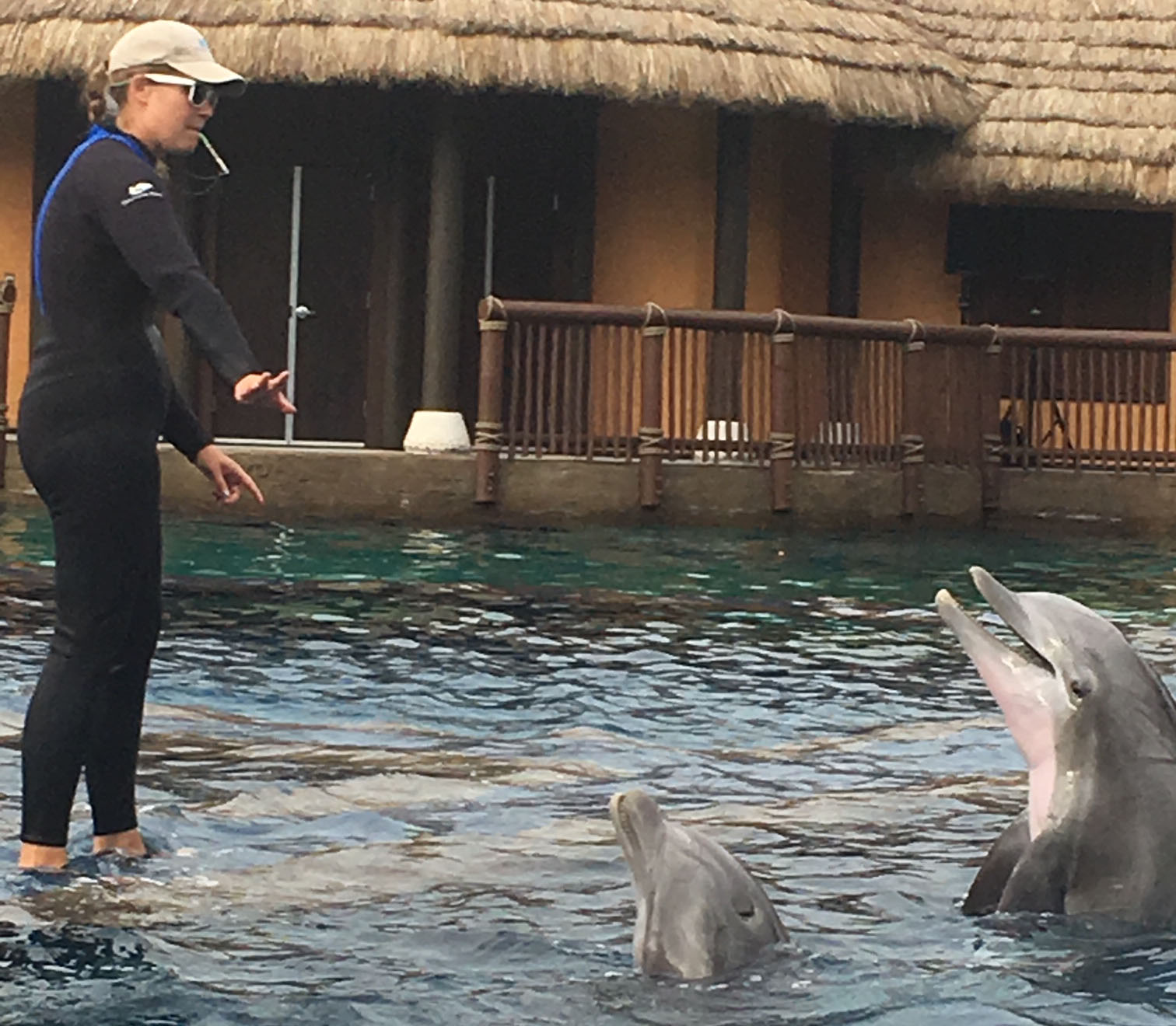 Dolphin and Trainer